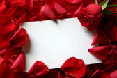 Red rose with petals and blank gift card for text — Stock Photo