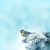 Bird (great titmouse ) in winter time — Stock Photo
