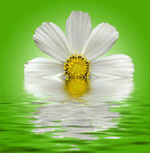 White flower on a green liquid background with ripples and reflections — Stock Photo