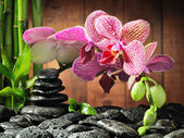 Flower on zen stones pyramide — Stock Photo