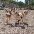 The family of seven sika deer — Stock Photo
