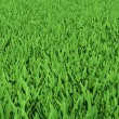 Field of green grass — Stock Photo