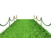 Path of green grass — Stock Photo