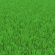 Field of green grass — Foto de Stock