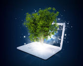 Laptop with magical green tree and rays of light — Stock Photo