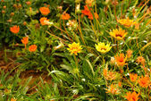 Flowers in green grass — Stock Photo