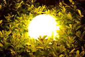 Night sphere light through leaves and branches — Stock Photo