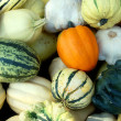 Lot of Pumpkins — Stock fotografie