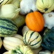 Lot of Pumpkins — Stock Photo