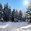 Winter Forest with Sun — Stock Photo