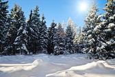 太陽と冬の森 — ストック写真