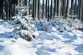 Zima wonderforest — Zdjęcie stockowe