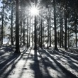 Foto Stock: Sunbeam in Winter Forest
