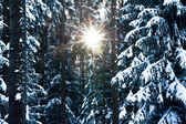 Sun through Winter Trees — Stock fotografie