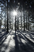 Sunbeam in Winter Forest — Stock Photo