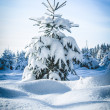 Snowy Fir Tree — Stock Photo