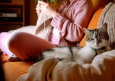 Idílicos cena na sala de estar — Foto Stock