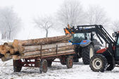 Tractor working with Tree Trunks — Stock Photo