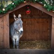 Donkey in a Christmas Stable — Stock Photo