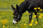 âne dans un champ de fleurs — Photo