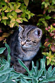 Curious Cat look out of a Bush — Stock Photo
