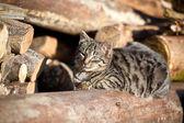 Relaxing Cat — Stock Photo