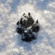 Royalty-Free Stock Photo: Dogs Footprint on Snow