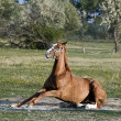 Horse standing Up — Stock Photo