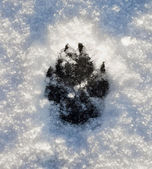 Dogs Footprint on Snow — Stock Photo