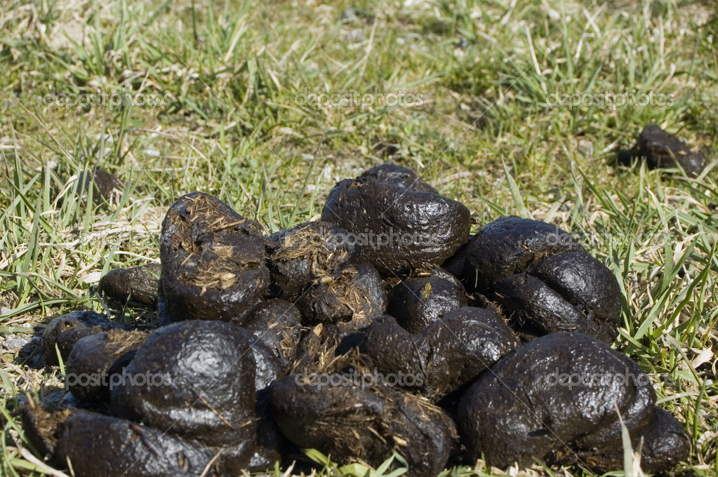 Horse Dung — Stock Photo © tepic #18561215