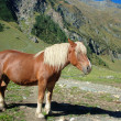 Beautiful Horse in Alps — Stock Photo #18587949