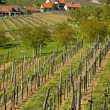 Vineyard in Wachau — Stockfoto