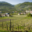 Stock Photo: Lower AustriWine-Growing District