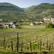 Lower AustriWine-Growing District — Stockfoto #18686745