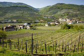 Lower Austria Wine-Growing District — Stock Photo