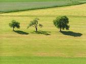 Three Trees — Stock Photo