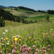 Summer Landscape in Austria — Foto de Stock