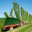 Harvester in a Hop Plantage - Stock Photo