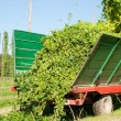 Stock Photo: Truck being loaded with Hops
