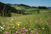 Summer Landscape in Austria — Stock Photo