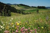 Summer Landscape in Austria — Stock Photo