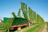 Harvester in a Hop Plantage — Stock Photo