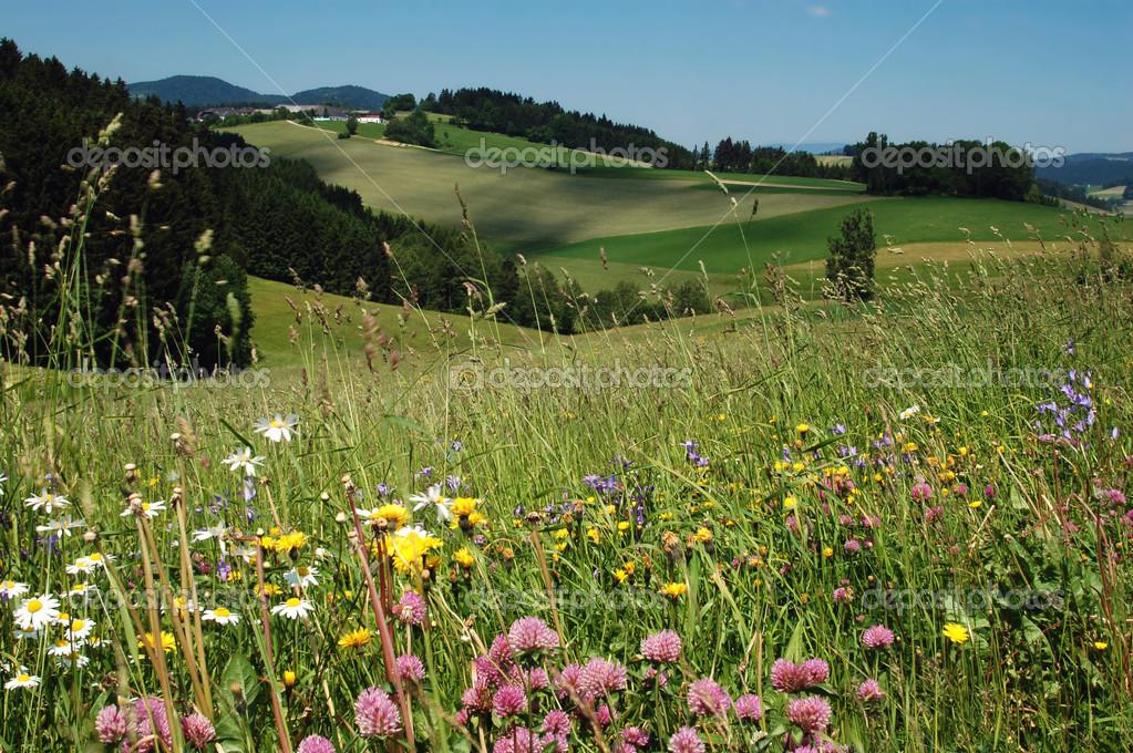 Фотообои Летний пейзаж в Австрии