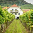 Farmers House in Vineyard — Stock Photo #18703959