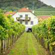 Stock Photo: Farmers House in a Vineyard