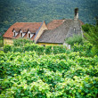 Farmhouse in an austrian Vineyard - Stock Photo