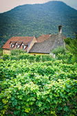 Farmhouse in an austrian Vineyard — Stock Photo