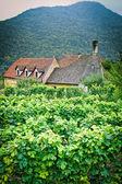 Farmhouse in an austrian Vineyard — Stock Photo