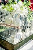 Doves on a Wedding Celebration — Stock Photo