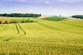 Farmland in Upper Austria — Stock Photo